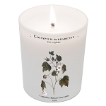 Carriere Gossypium Barbadense (cotton flower) candle
